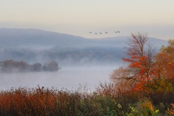 Fog Over Lake with Flying Geese
