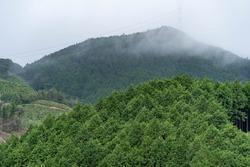Fog pass through the mountains.