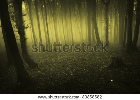 fog rising in a dark forest at morning