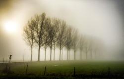 Fog trees in mist landscape