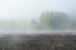 Foggy agricultural fields, lonely tree. Land is left for winter as ploughed land, sowing has passed, spring sun warmed earth, soil dries and steam rises. Beautiful farm landscape in fog