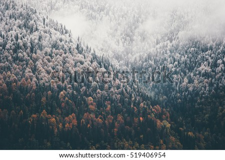 Foggy Autumn Coniferous Forest Landscape aerial view background Travel serene scenic view
