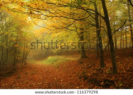 Foggy autumn Forest with colorful Trees