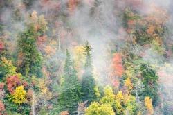 Foggy Autumn Forested Hillside North Carolina Southern Appalachian Blue Ridge Mountains