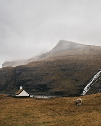 Foggy autumn landscape with sheep on blown field, church and waterfalls on background