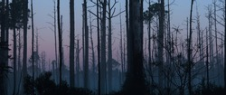 Foggy autumn morning through the charred remains of a wooded area.