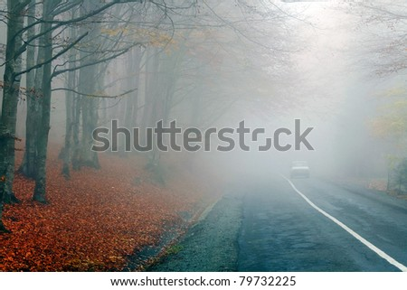 Foggy autumnal road