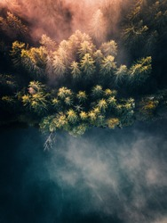 Foggy cloud, pine forest shoreline and lake at sunrise, aerial top down view. Fantastic moody  nature background