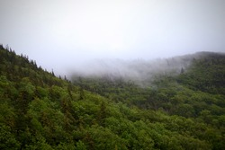 Foggy, Cloudy view of the forest and trees on the Cabot Trail in Cape Breton, Nova Scotia