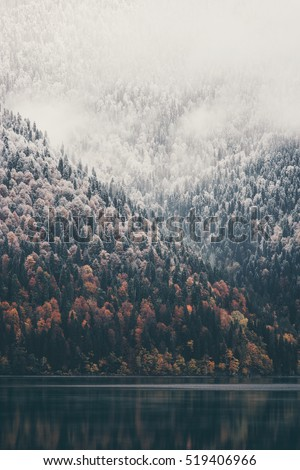 Foggy Coniferous Forest and lake wild woods landscape Travel concept serene scenic view