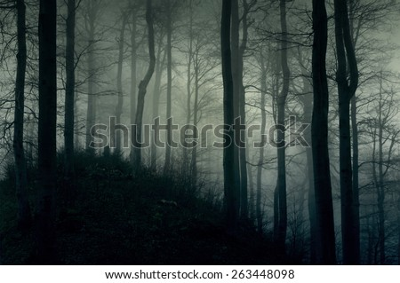 Stock Photo Foggy dark forest with a black slope