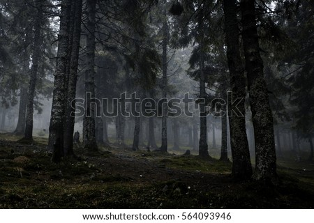 foggy dark forest with a black...