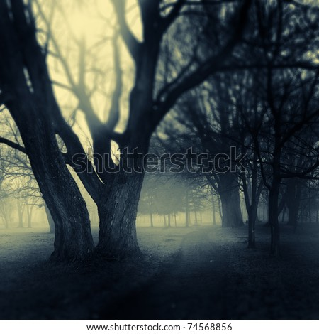 Foggy darkened path leading through the bare trees of a park.