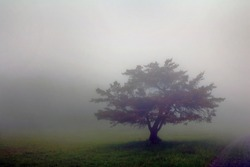 Foggy day at Big Meadows in Shenandoah National Park, Virginia.