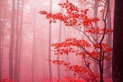 Foggy day into the forest during autumn