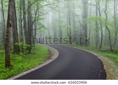 Foggy Drive Through Forest - Shutterstock ID 626023406