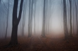 foggy forest after rain in autumn
