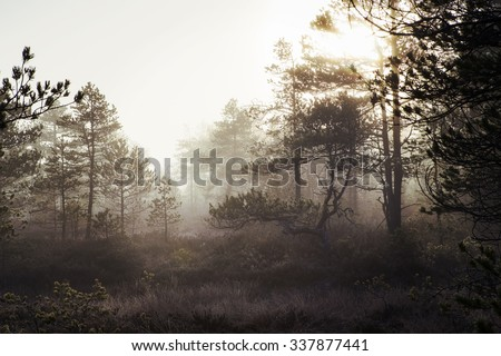 Foggy forest. An image of a pine forest at the swamp. Image taken on a cold morning in November in Finland. Image has a vintage effect applied.