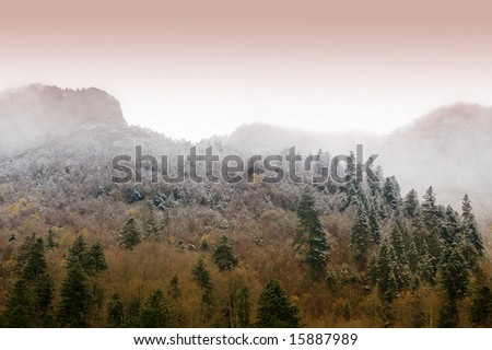 Foggy Forest at Dawn - stock photo