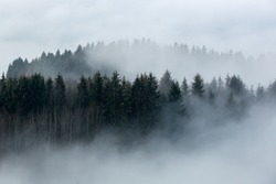 Foggy forest in a gloomy landscape