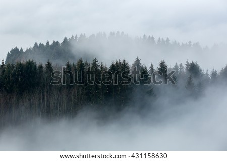 Foggy forest in a gloomy landscape #431158630