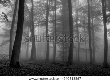 Foggy Forest in Fall Season #240613567