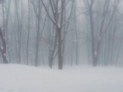 Foggy forest in the morning. Fabulous winter landscape. Trees are covered with snow in a white fog.