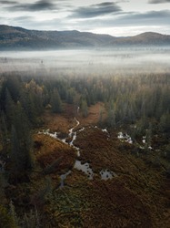 Foggy forest landscape. Misty morning, scenic nature with fog,captured from above with drone.