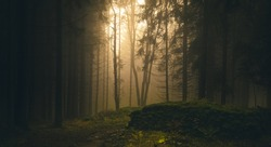 Foggy forest, light coming through trees, stones, moss, wood fern, spruce trees. Gloomy magical landscape at autumn/fall. Jeseniky mountains, Eastern Europe, Moravia.