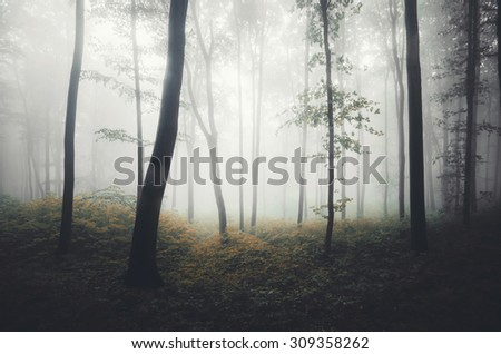 foggy forest with soft light #309358262