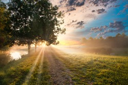 Foggy landscape at sunrise with sun behind tree crown and penetrating sun rays from cloudy sky spread over an awakening landscape
