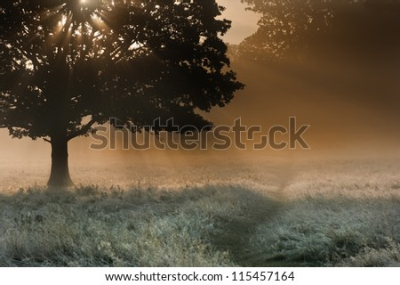 Foggy landscape is lit up at sunrise by sunbeams pouring through frosty landscape