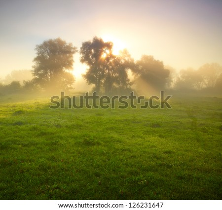 Stock Photo Foggy meadow at sunrise