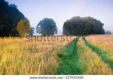 foggy meadow with road landscape.