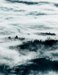 foggy, misty landscape breaking through the clouds. Tree sihouettes