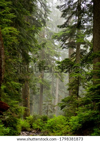 Foggy Morning in the Forest Foto stock ©