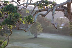 Foggy morning in the golf course looking through the tree branches