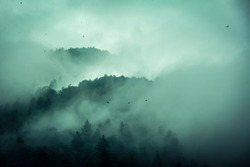 Foggy morning in the mountains-wooded mountain tops, birds in the fog, clouds.