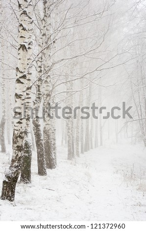 Foggy morning in the winter wood
