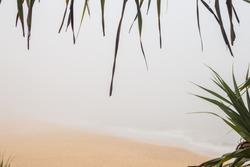 Foggy Morning Ocean Beach Coastal Trees