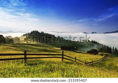 Foggy morning shiny summer landscape with mist and green meadow #213395407