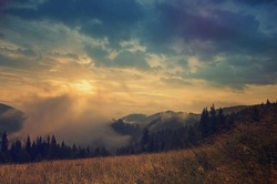 Foggy morning shiny vintage summer landscape with mist, golden meadow and sun shining