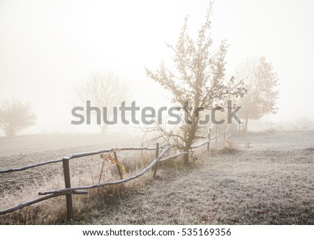 Foggy morning, the ground is covered with frost