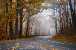 Foggy morning with Autumn color along the Blue Ridge Parkway.