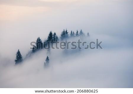 Foggy mountain landscape. Carpathian mountains, Ukraine Сток-фото ©