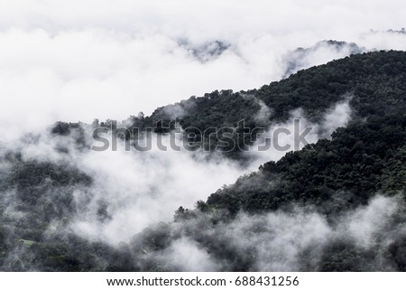Foggy mountain with sea of fog in Loei, Thailand #688431256