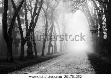Foggy mysterious old oak alley in black and white
