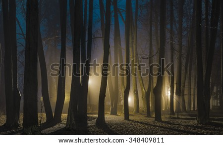 Foggy night in late autumn. The park of Museum-Reserve \