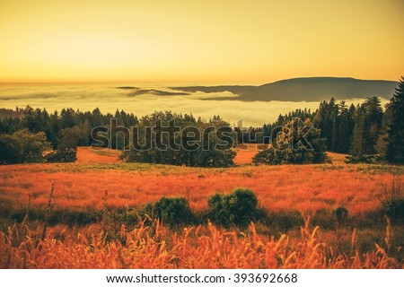 Foggy Northern California Valley Landscape at Sunset. United States.
