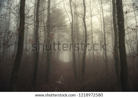 Foggy path in the forest #1218972580
